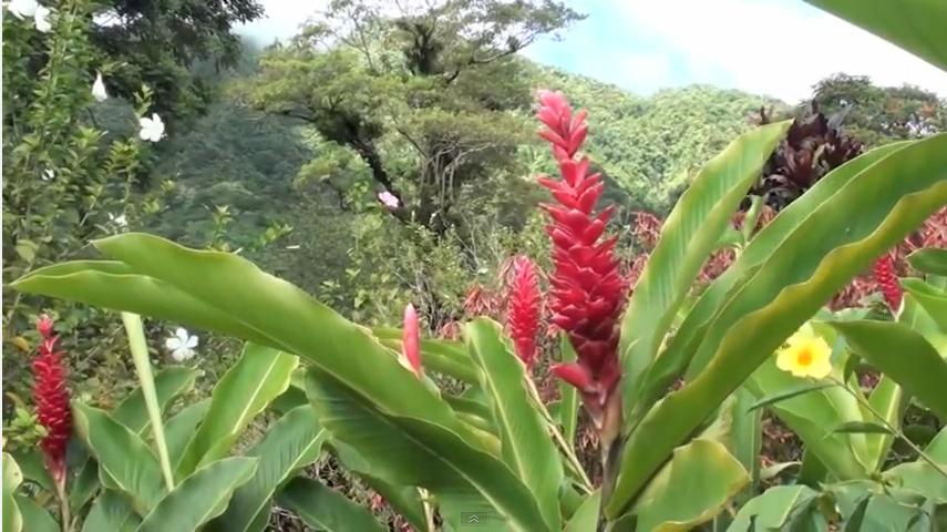 Garden of Eden in Saint Vincent and the Grenadines